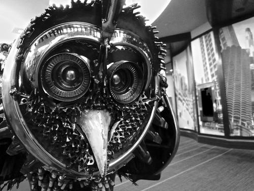 8.14 - Owly