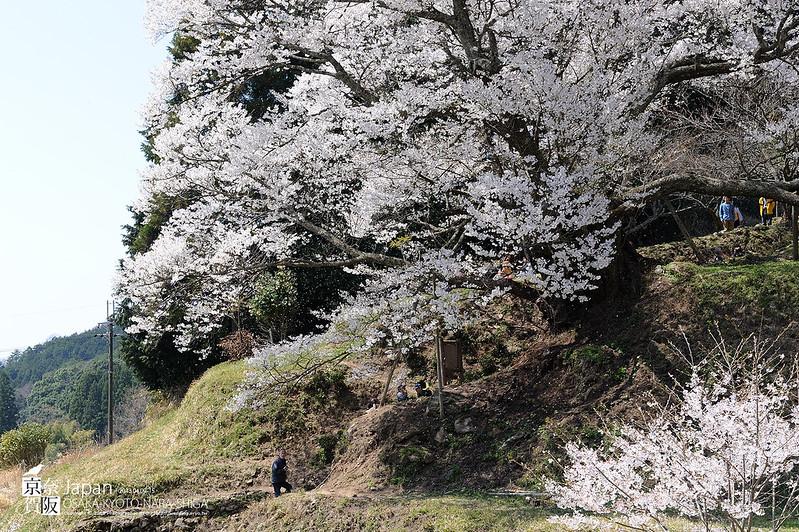 Japan-1482