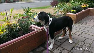 Islay gardening