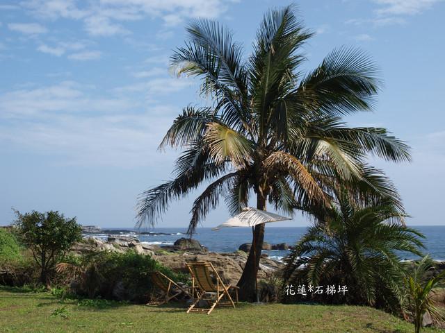 矮椰子树下是睡午觉的好地方