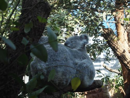 P9146539 WILD LIFE SYDNEY ZOO シドニー動物園
