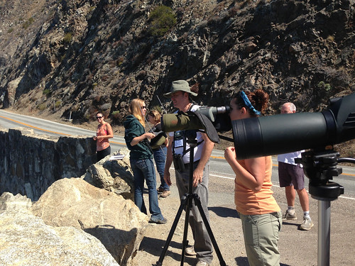 Looking at California Condors at a pullout off Highway 1 in California's Big Sur.