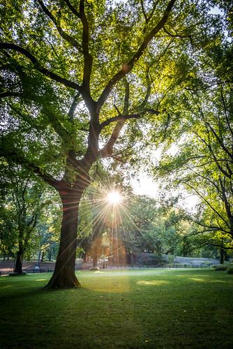 September Morning in Central Park