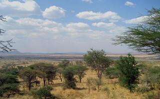Blick von der Lodge in die Serengeti