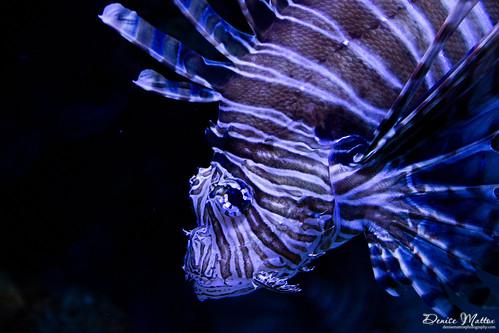 319: Ripley's Aquarium