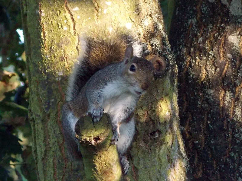 Noisy Squirrel by Deb Simpkins