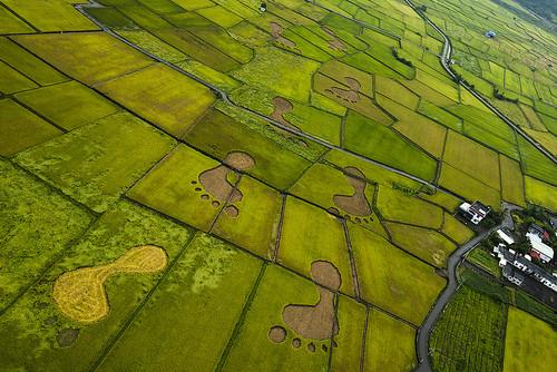 玉里稻田上的大腳印,象徵台灣農業殷實帶來的無窮的希望。(攝影:齊柏林,台灣阿布電影公司提供)