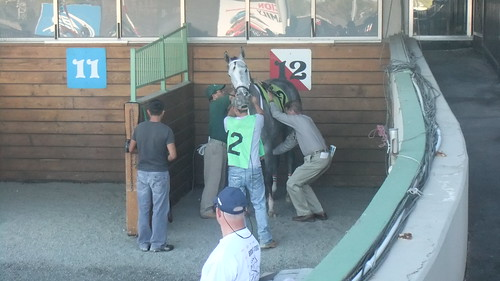 Tim Hills Saddling Tequilawytlightnin Before Race 1