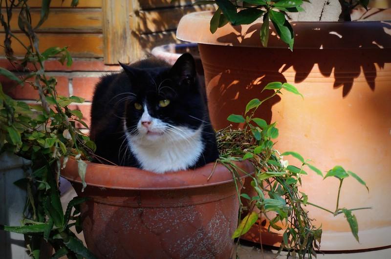 Stray-Cats-Istanbul-(19)
