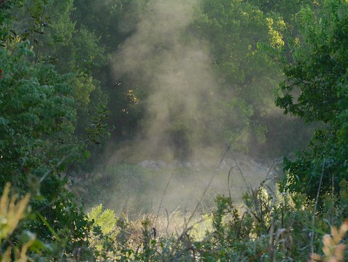 Mist on Lake Creek