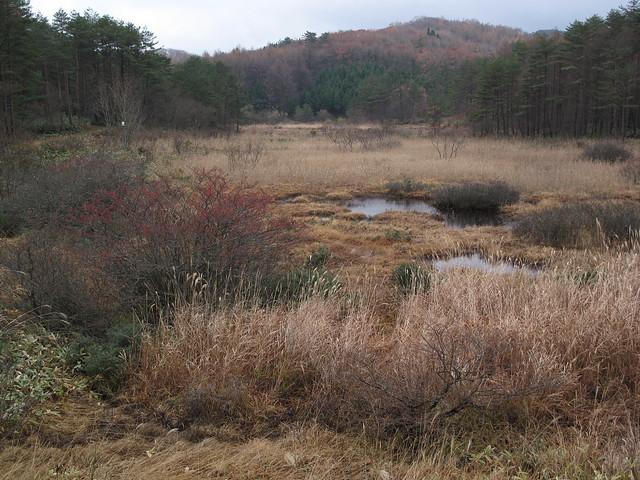 振り返ると八幡湿原は冬模様.