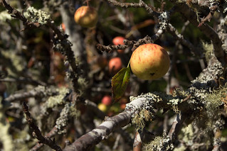 Fort Ross Orchard