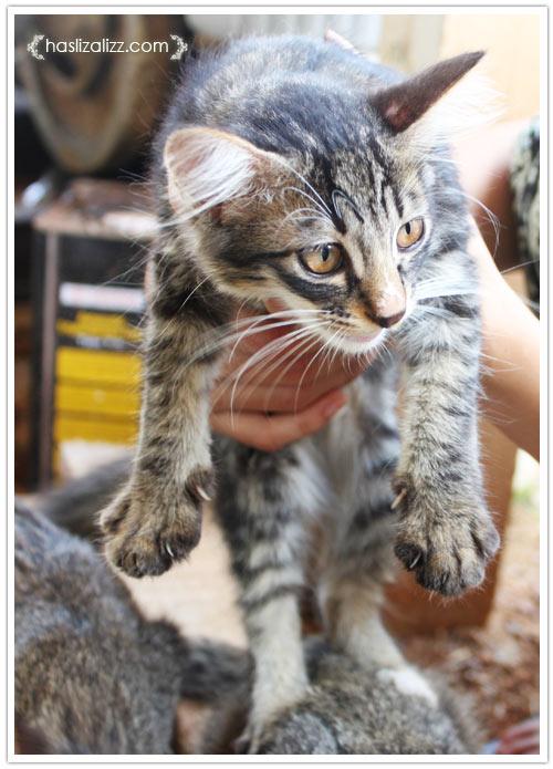 10988689885 67fa401131 o kucing kesayangan nenek