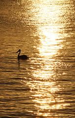 Yamba silhouette