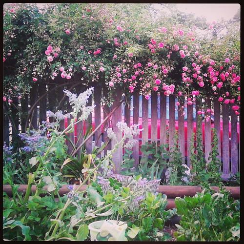 Font garden Nov 2013