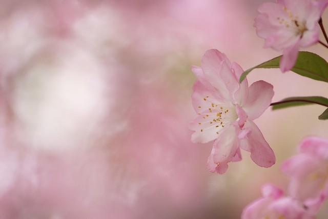 春色の想い3