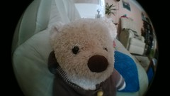 Teddy's ready for Christmas