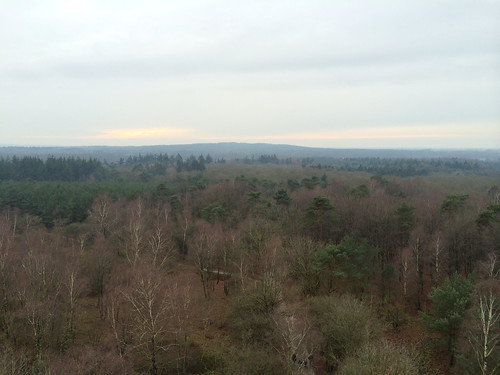 View from the tower on the Besthemer Berg in Ommen (NL) over the forest