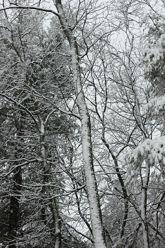 Shots from a snowy Saturday