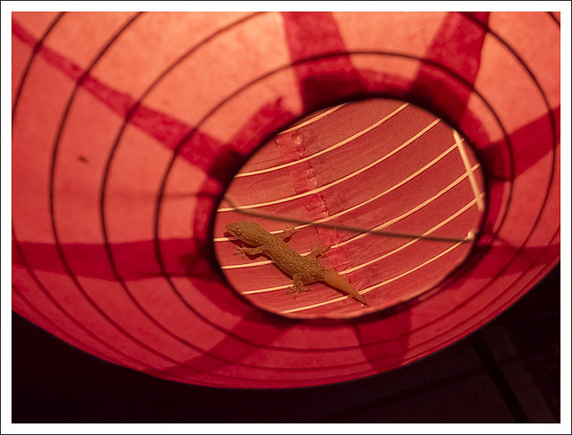 Gecko In A Lantern 2