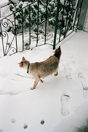 snow-patrick3