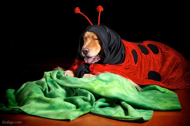 Ladybug Henry