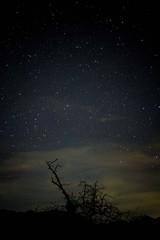 Broken Tree and Stars