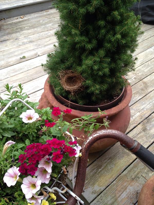 vintage bicyle planter