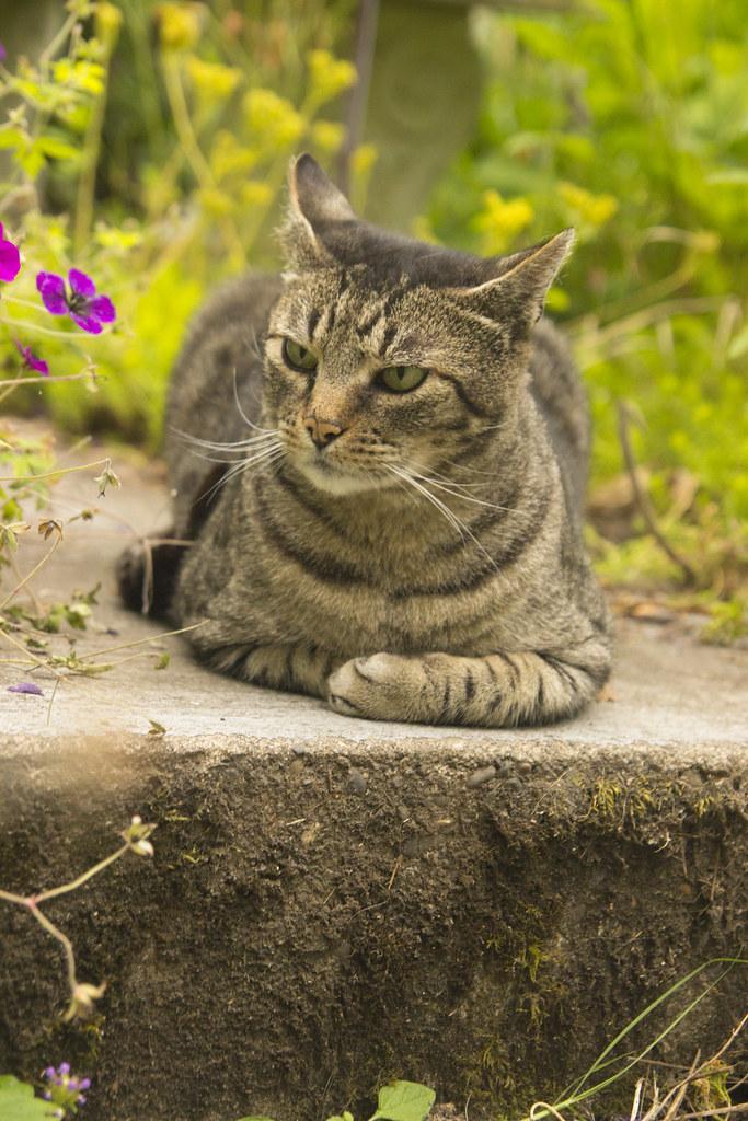 Punku Cat