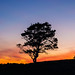 Tree at Sunset by E. Aguedo