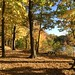 Afternoon Stroll at Wampus Lake, Armonk by CCC Photography