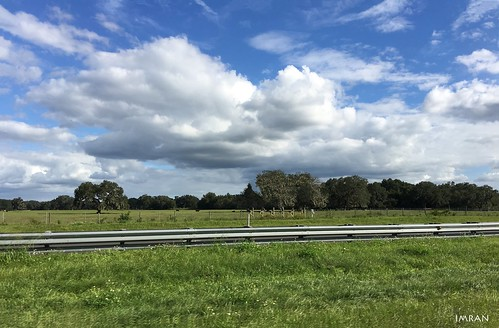 bluesky clouds cows farming farmland fence florida green greenery highway iphone iphone6splus median noediting pasture roadway travel trees truecolors wildflowers