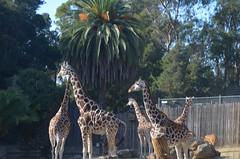 Oakland Zoo November 12