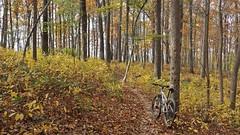 2016 Bike 180: Day 199 - Golden