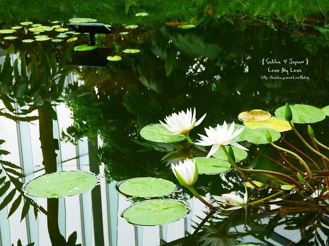 日本東京景點新宿御苑溫室植物 (20)