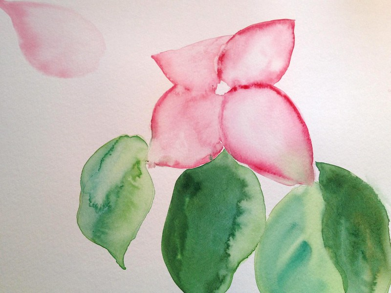 Dogwood watercolour more free flowing