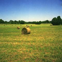 Field at Les Guillons