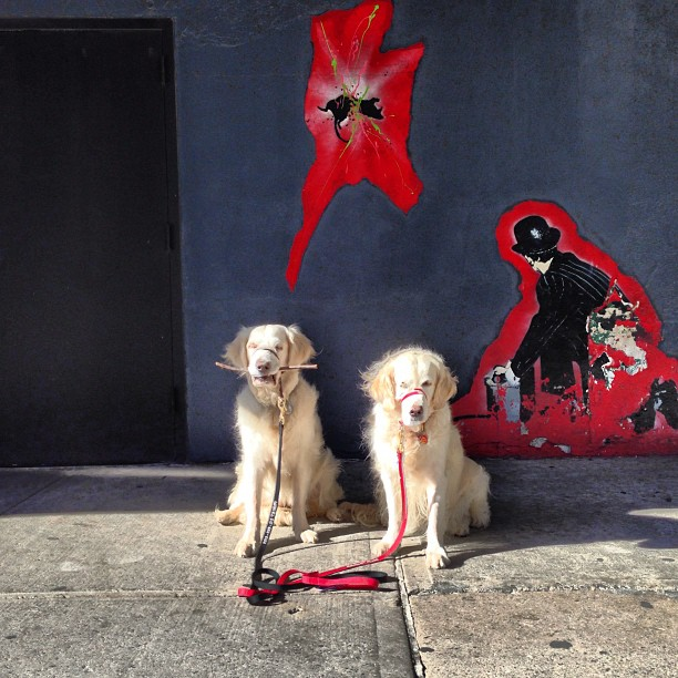 Occasional Street Art Dogs