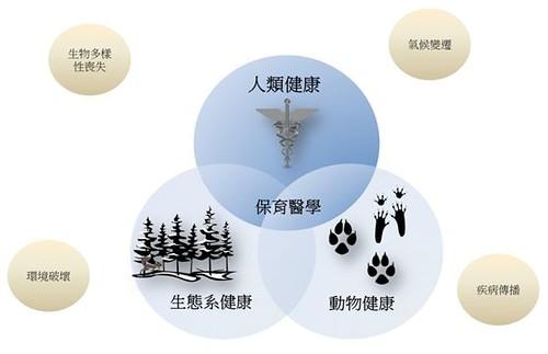 保育醫學綜合許多科學領域之知識並致力於了解生態環境與健康之關係。其中包含人類健康、生態系健康及動物健康等領域,而這些領域又常與其他環境因子如生物多樣性、氣候變遷、環境破壞及疾病傳播等因子互相影響。(陳貞志整理)