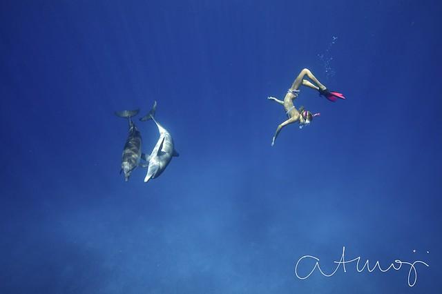 Bimini Dolphin Swim - 18/2013