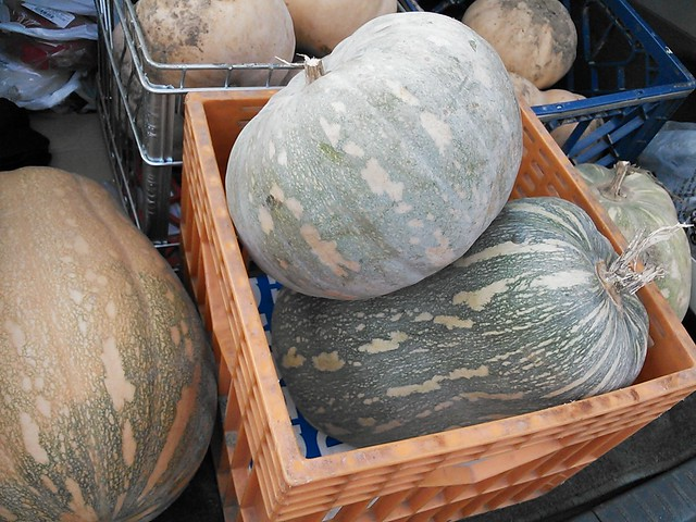 Cross of a pumpkin and a zucca