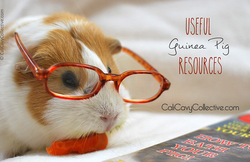 Useful Guinea Pig Resources links