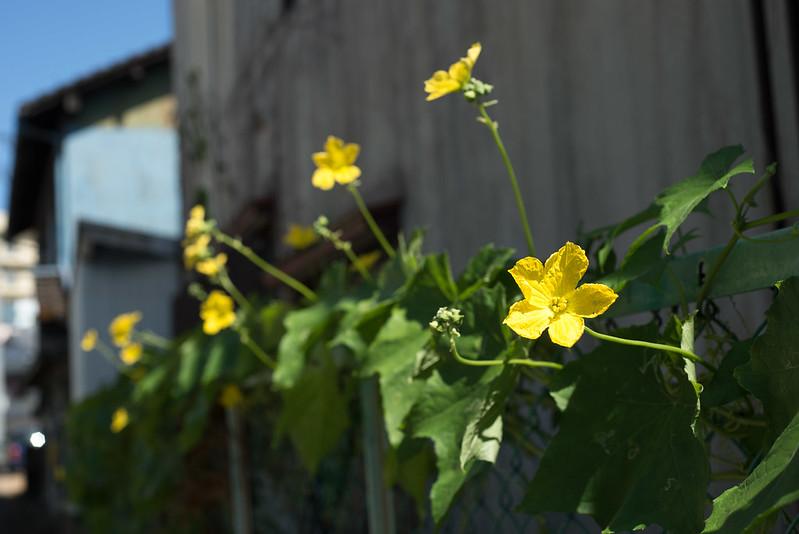 黄色いflower
