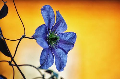 flower poland pentaxk5