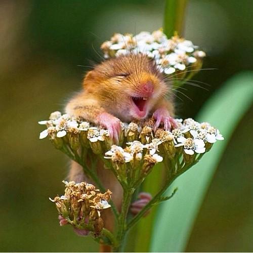 Happy hump day! lol....