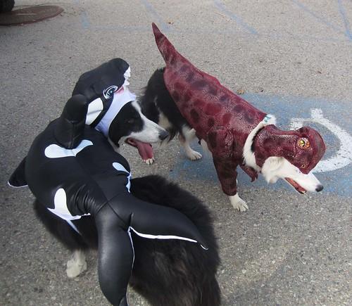orcavsraptor