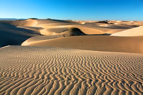 dunes tlc 2013 blacklakedunes