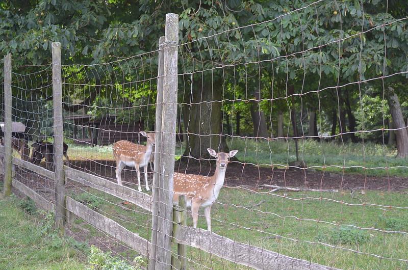 Rheingau Romantik Tour_deer