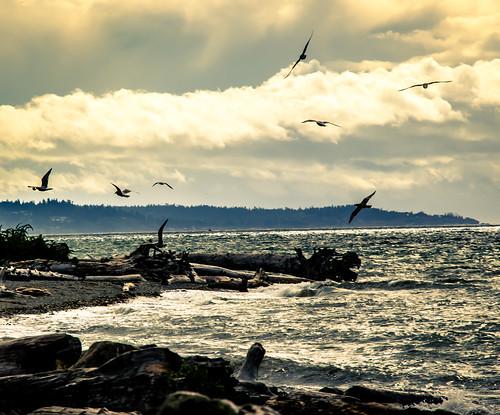 seagulls beach clouds mukilteobeach