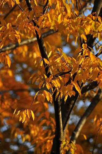 315: Fall's Last Gasp